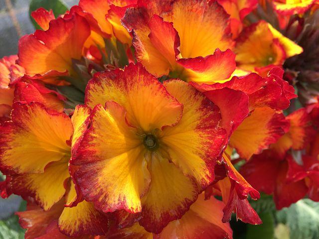 flower-3150838__480.jpg