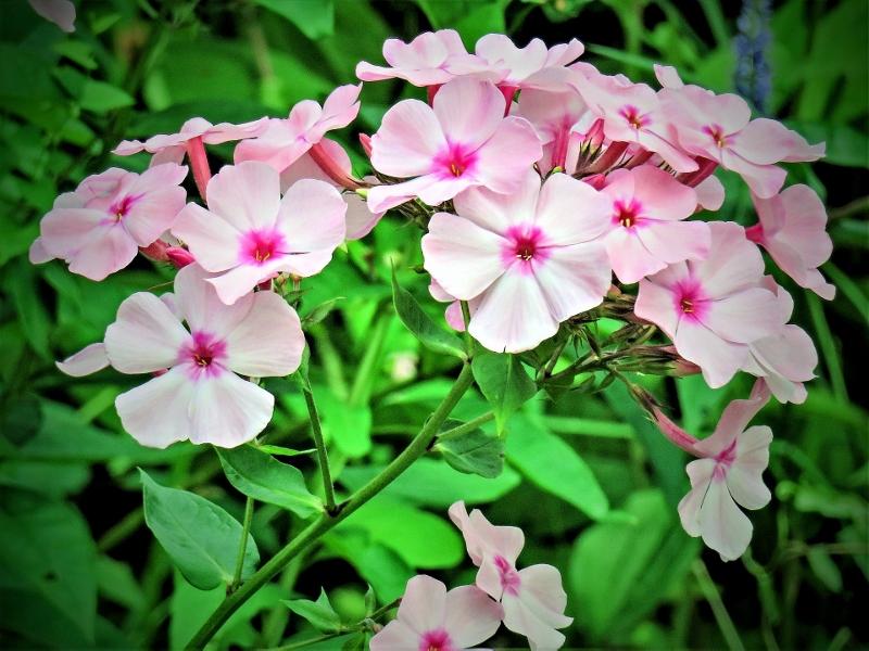 flower-2614481_1920 (800x600).jpg