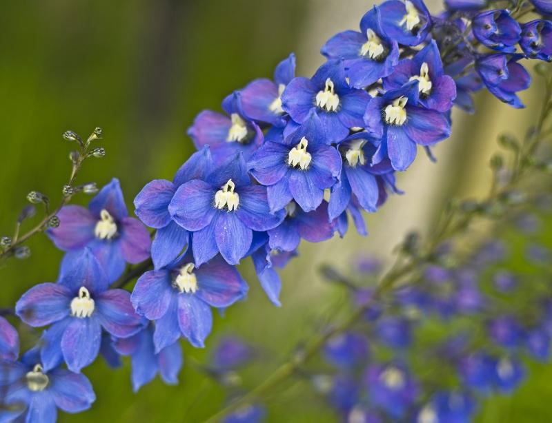 flower-3567089_1920 (800x614).jpg