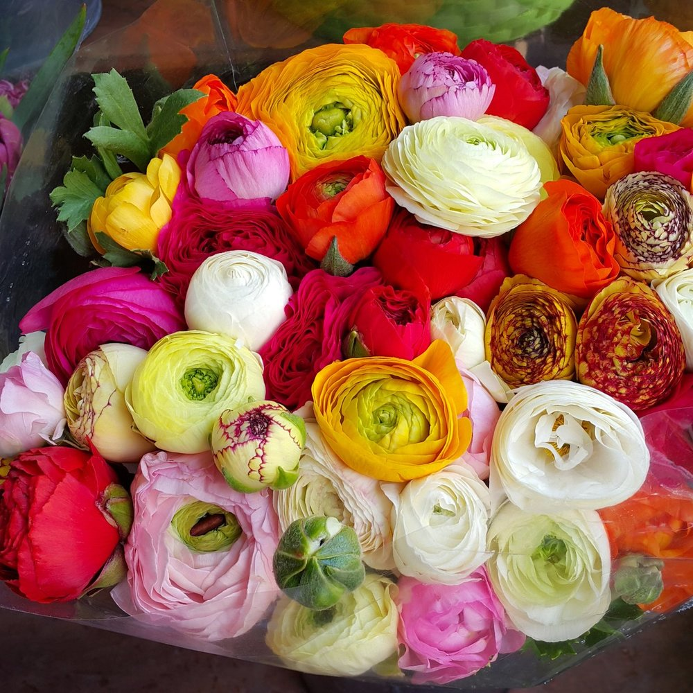 Rananculus Rainbow Mix