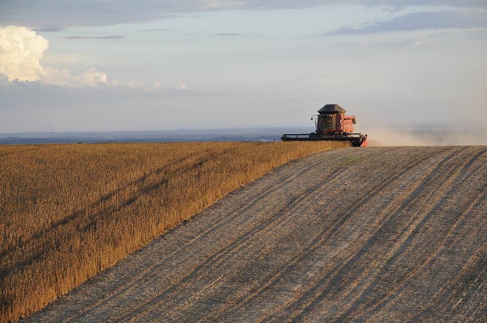 harvest soybeans.jpg