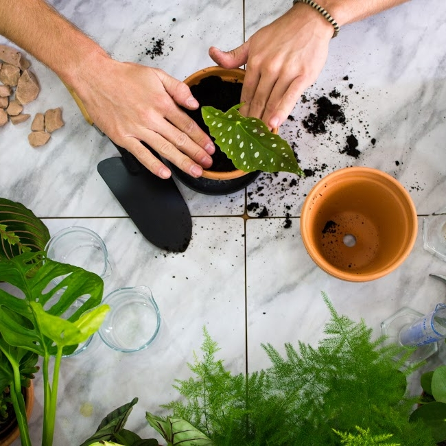 3. 11. 2018Hænke Phytolab: Urban Jungle - Přijďte si vytvořit zelenou džungli ve speciální edici workshopů s Haenke, zaměřených na správnou péči o vaše pokojové rostliny. V něm vám vysvětlíme, jak fungují biologické procesy rostlin, abyste lépe pochopili, co přesně potřebují ty vaše. Kolik světla? Jak často zalévat? Jaká zemina je vhodná pro vaší oblíbenou zeleň? A jak funguje řízkování rostlin?V ceně workshopu: jedna pokojová rostlina, hliněný květináč, dva řízky rostlin podle vašeho výběru, malé občerstvení, brožura—15 – 16:30 hod. | Canapé: Bistrocena 500 Kč, kapacita 10 osob | Facebook
