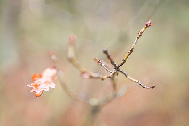 Het laatste blaadje aan de boom terwijl de eerste knoppen alweer zichtbaar zijn. Dag herfst/winter, hallo lente. Van mij mag je beginnen! #herfst #autumn #leaves #autumnleaves #winter #spring #lente #leaves #autumncolors #speulderbos #ermelo #forrest #fall #nikon #35mm #naturephotography #ig_serenity #treespleasure #tree_pictures #tree_perfection
