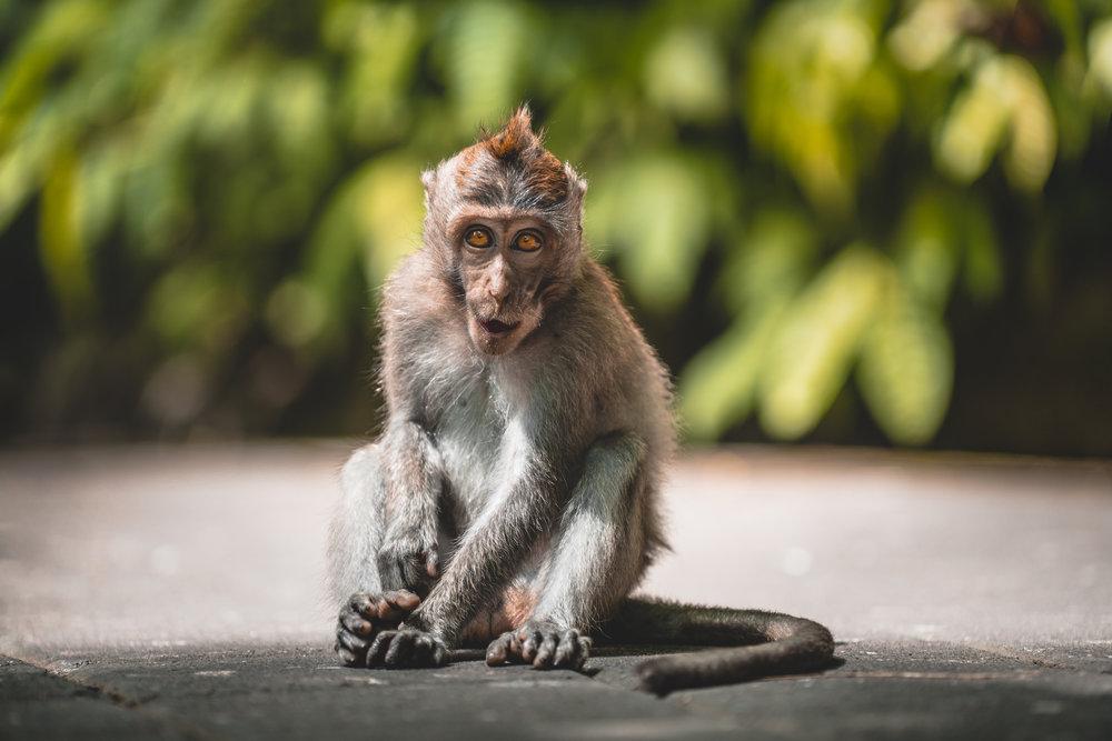 monkey unfinished.jpg