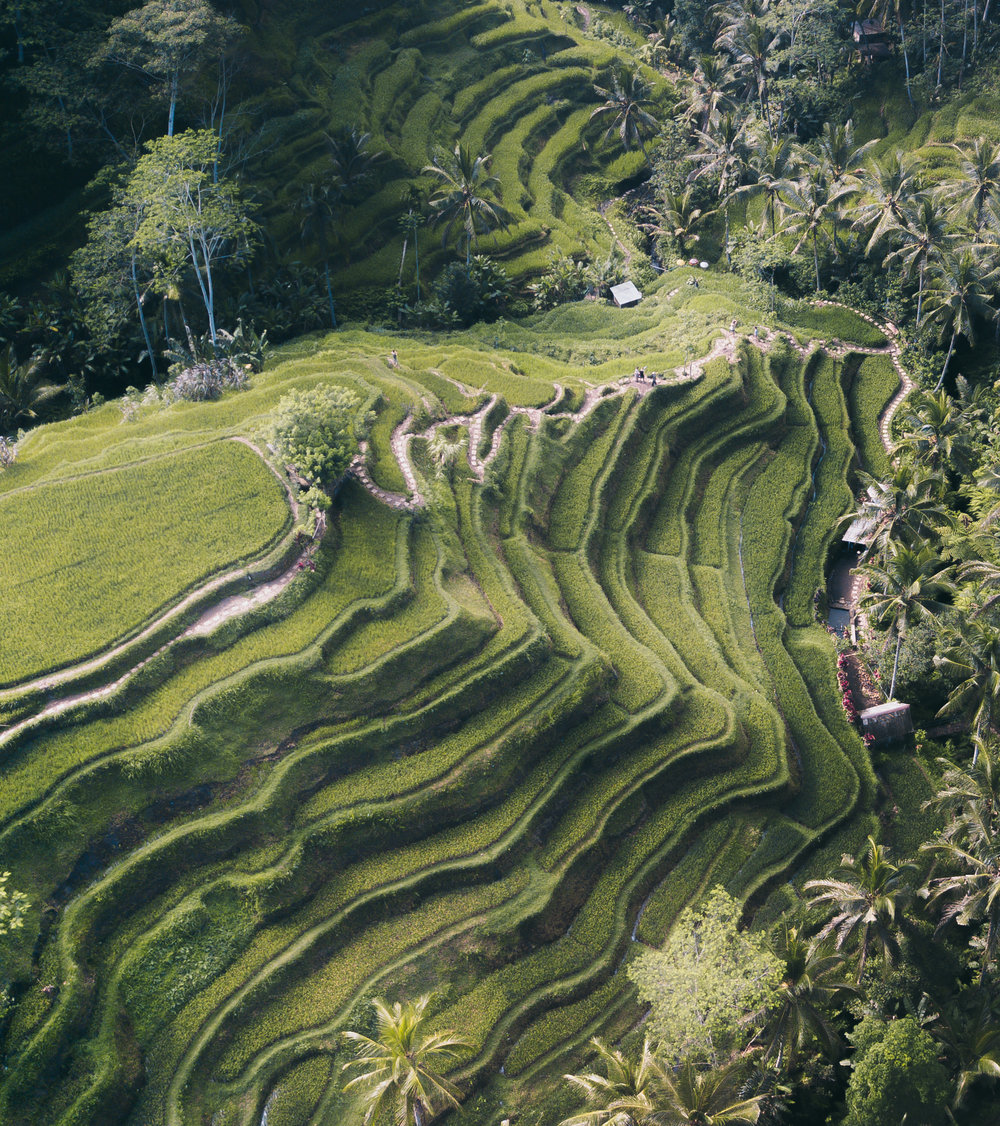 tegallallang rice terrace (Portfolio 5).jpg