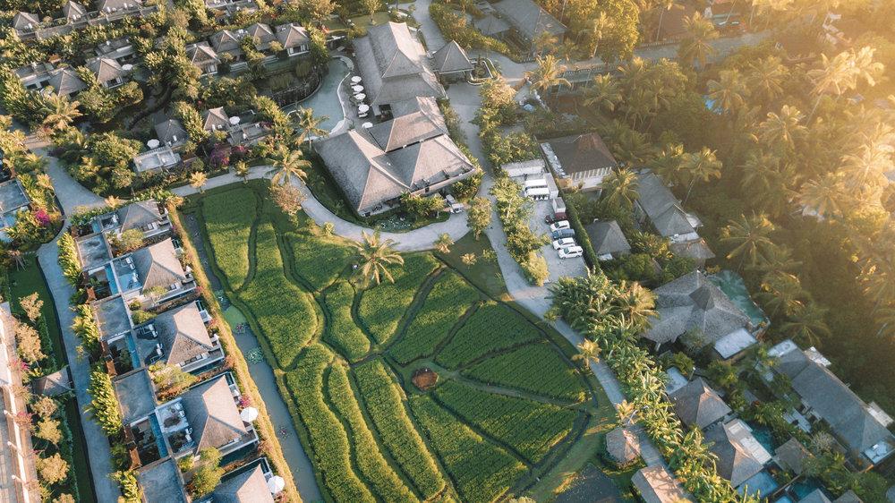 Drone Shot Visesa Ubud.jpg