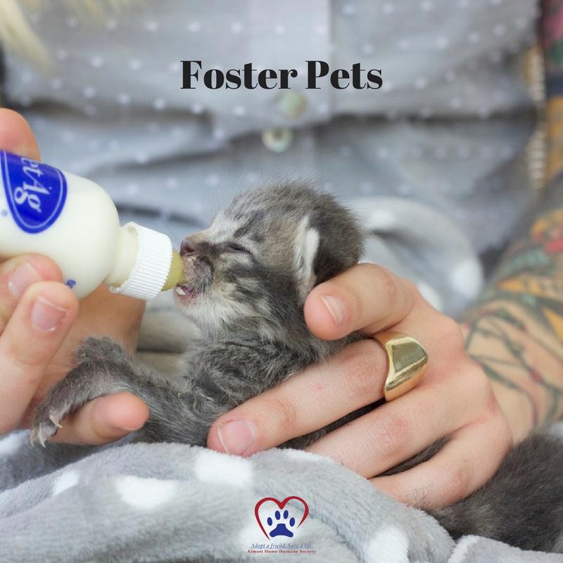 Foster Pets.jpg