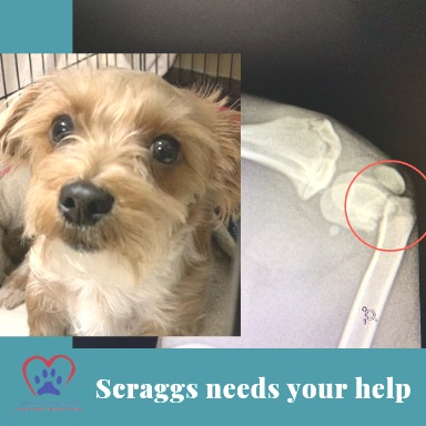 scraggs+needs+help-website-1.2+%281%29.jpg