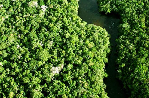 Empresa Brasileira de Conservação de Florestas -