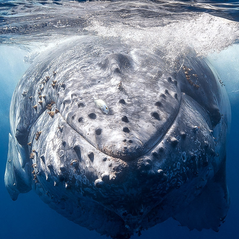 whale_augmented_nature.jpg