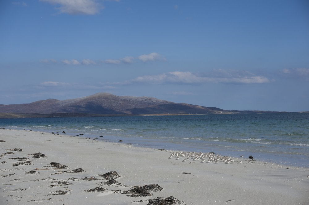 white shell beaches - Stay in Lamraig cottage and walk our stunning, soft, sandy, empty beaches. Sit quietly to watch bird life, catch the glimpse of an otter on the rocks or porpoises off the North shore.