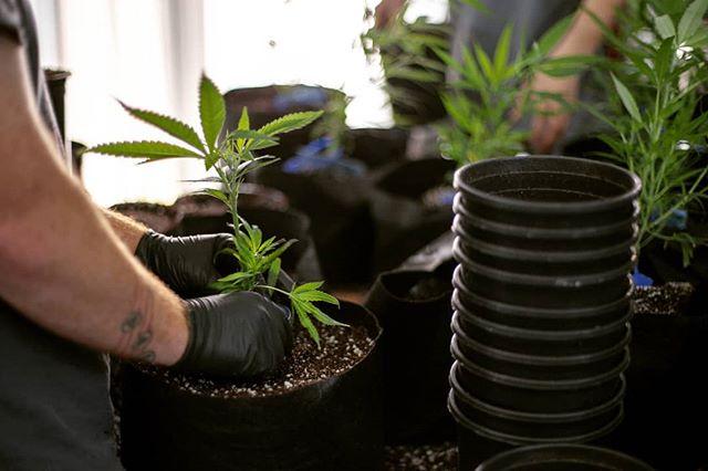Work Hard. Spread love. Plant seeds. 🌲🌲🌲🌲🌲 #workhard #seeds #cannabis #plants #weed #greenhouse #farm #oregon #oregoncity