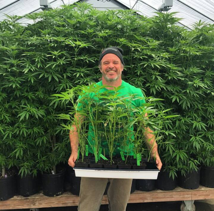 Kevin Jodrey holding a tray of some Louis XIII clones in soil in the Wonderland Nursery greenhouse
