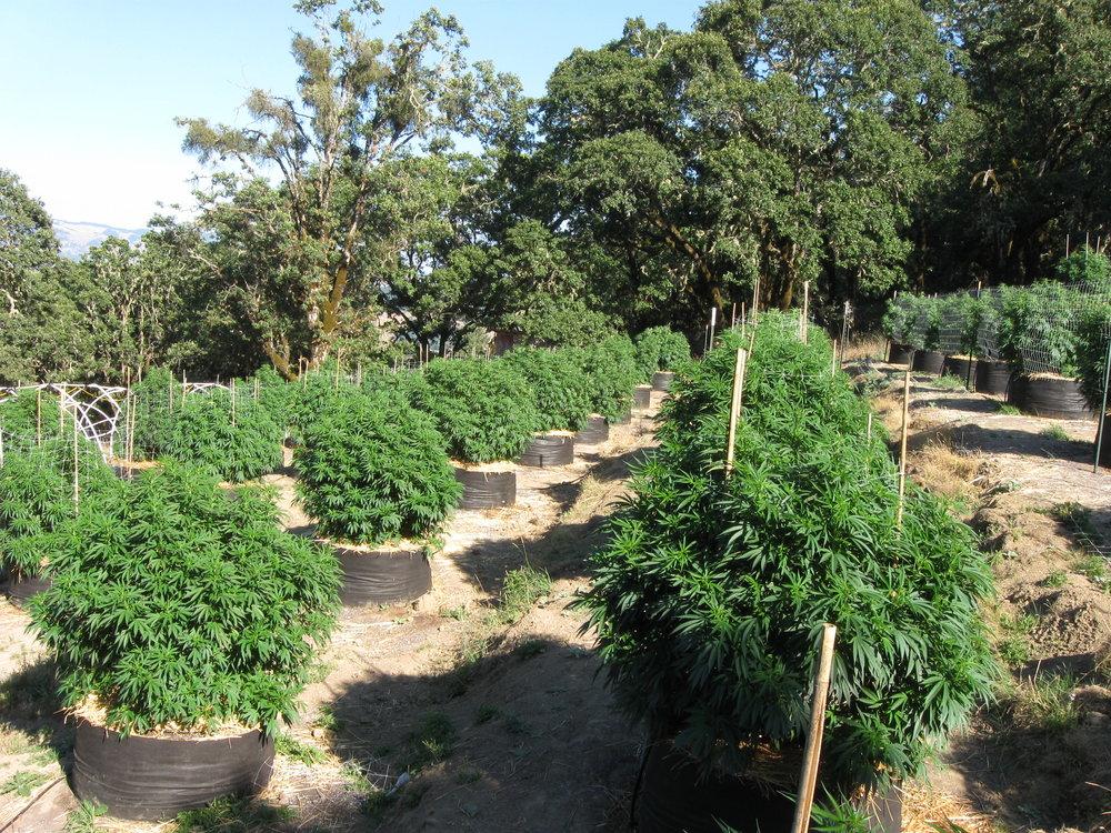 Dan's farm in 2011 (courtesy of Rebel Grown)