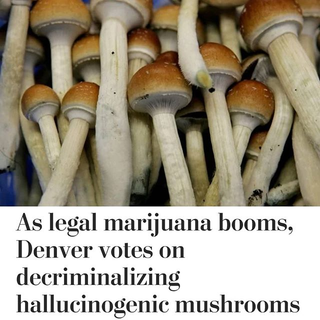"If you thought legalized marijuana truly put the ""high"" in the Mile High City, wait until you hear what #Denver is up to now. On Tuesday, residents will vote on whether to effectively decriminalize psilocybin mushrooms, the hallucinogen used by some cultures for religious purposes for centuries, and outlawed by the federal government since 1970. - The movement to ""Decriminalize Denver"" is the nation's first public referendum on ""#magicmushrooms,"" after an effort in California failed to reach the ballot last year. Initiative 301 would apply only to Denver, not the entire state of Colorado. It would place into city code the directive that enforcing laws for personal use or possession of psilocybin mushrooms ""shall be the lowest law enforcement priority in the City and County of Denver,"" though having the mushrooms would still technically be illegal. The mushrooms would not be available in the city's cannabis dispensaries, and sales would still be classified as a felony. They would remain classified a Schedule I drug under federal law, as is marijuana, with ""no currently accepted medical use and a high potential for abuse."" - The image of hallucinogens as chemicals that launch users into a swirling mélange of colors and voices, presumably impairing one's ability to drive or operate heavy machinery, can be tough to overcome. But supporters say the mushrooms' powerful mind-altering qualities can have long-term positive effects on addiction, depression, chronic pain, anxiety and post-traumatic stress disorder, in addition to the eight-hour journeys into the mystic. - #Psilocybin is not #addictive, does not lead to #overdoses and is not thought to have long-term side effects, research has shown. It is a naturally occurring compound in some #fungi. A number of studies have shown positive effects on people addicted to opioids, alcohol or tobacco, as well as diminished depression and anxiety. Researchers have found such benefits to mushrooms that the Food and Drug Administration has granted ""breakthrough therapy"" status to study psilocybin for treating depression. - Cont. In Comments 🌲🌲🔥🔥💨💨 #Beardbros_Pharms #BeardBrosMedia #BBMedia #CannabisNews #losangeles"