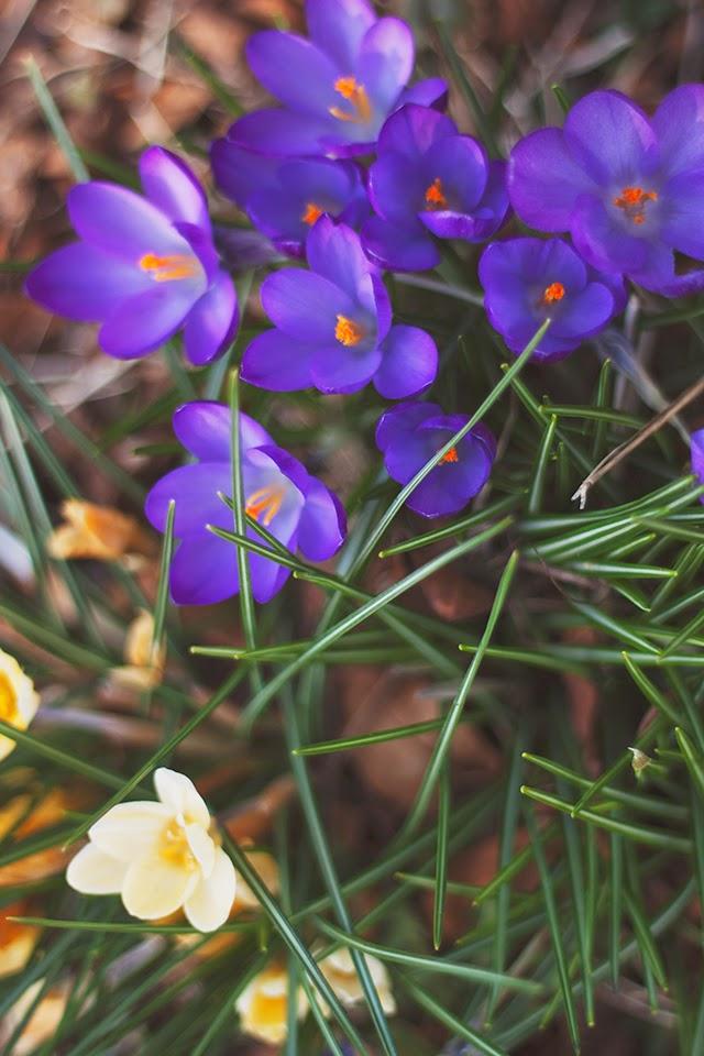 springlinklove.jpg