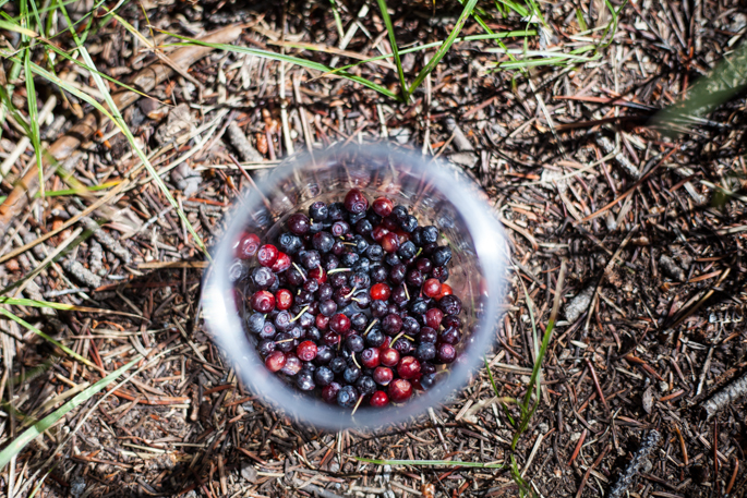 montana cherries & huckleberries + how planning a wedding is like a rip tide