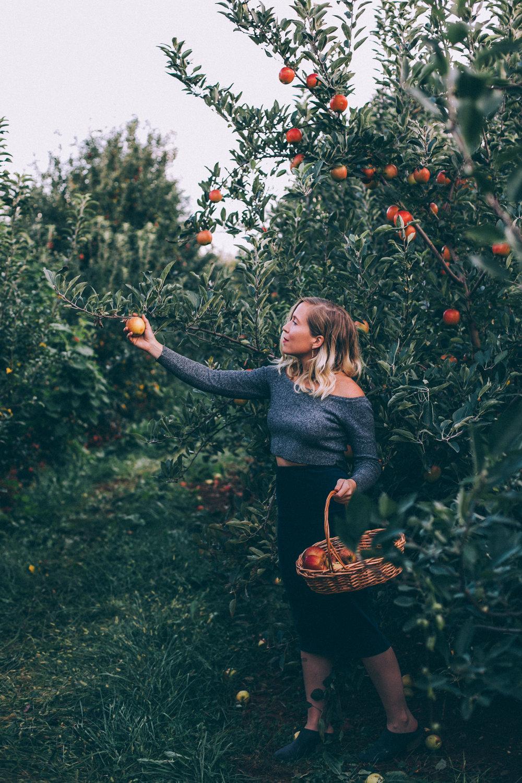 picking apples in virginia