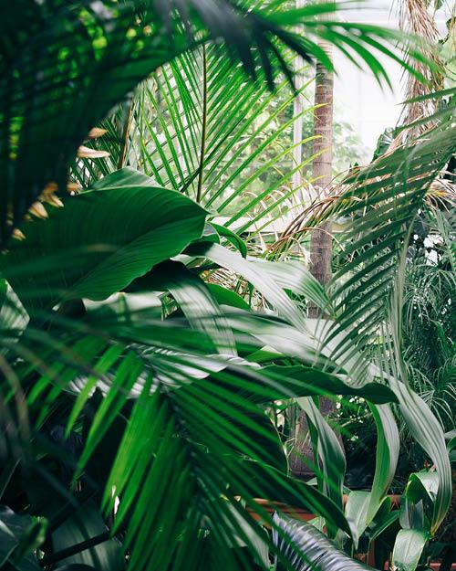 Marianne_August_Plants.jpg