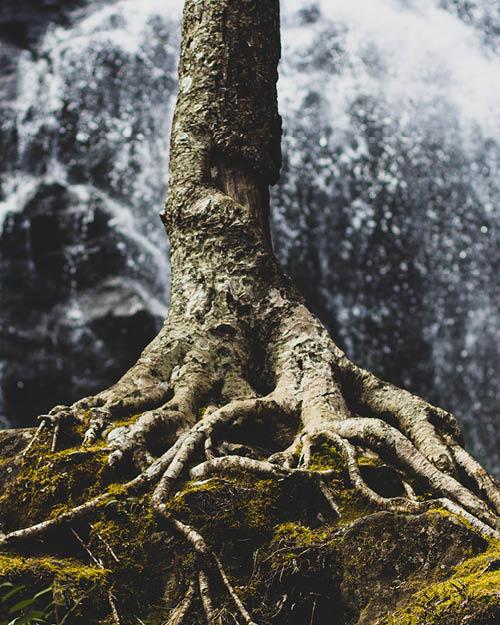 Marianne_October_Tree.jpg