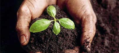 Healthy Soil - Healthy soil can increase water infiltration and hold up to 20 times its weight in water, significant factors in minimizing flood impacts. Increasing the organic matter in soil can increase its available water-holding capacity. Soil also absorbs carbon. The world's soils store on the order of 2,500 gigatons of carbon, approximately 75% of the carbon pool on land—three times the amount in the atmosphere.