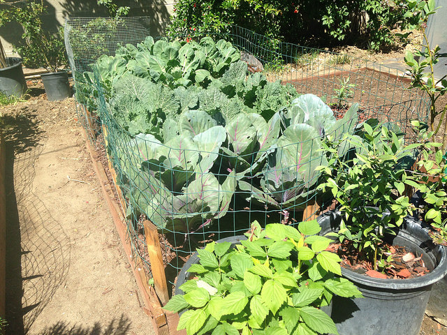 Edible Gardens - Edible gardens, like their name, are gardens which have food that can be eaten.  Water LA works with families to develop gardens with vegetables and fruits which are region–appropriate