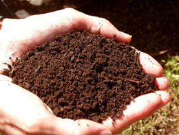 Healthy Soil - Healthy soil can increase water infiltration and hold up to 20 times its weight in water, significant factors in minimizing flood impacts. Increasing the organic matter in soil can increase its available water-holding capacity.