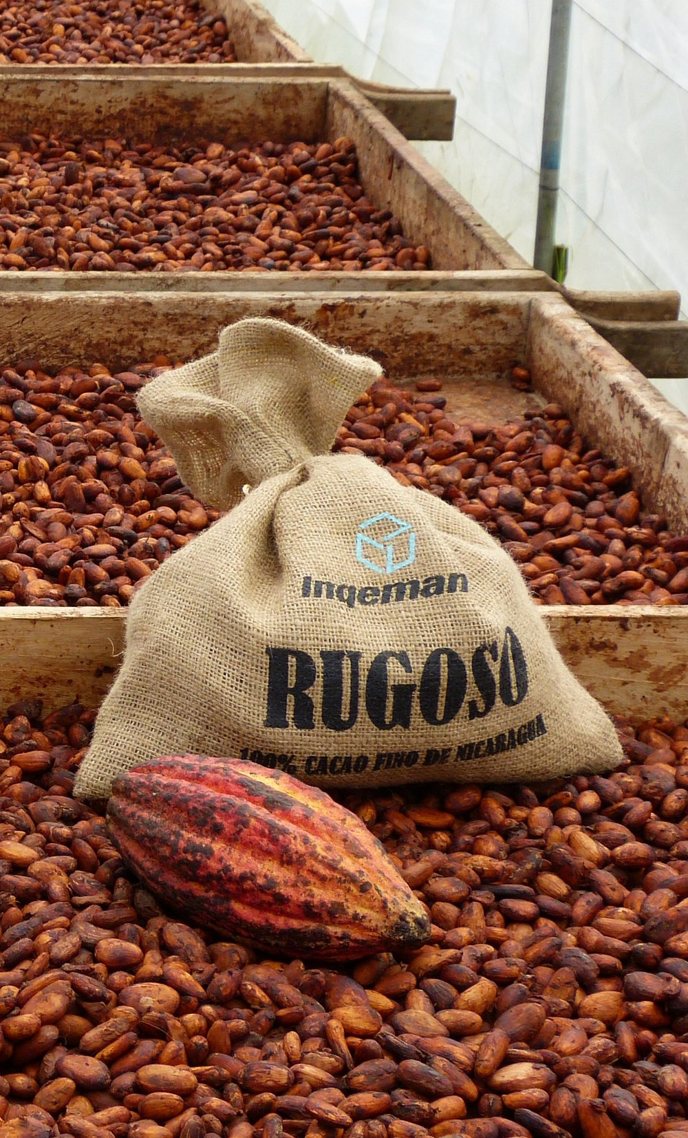 - Rugoso got awarded in 2014 with the regional cocoa of Excellence Award - best of Nicarauga.In 2015 it won the international Cocoa of Excellence Award.ZOTO bought the award winning lot and makes a unique chocolate from it with the help of Chocolatoa.Winning Bronze at the European Chocolate Awards, gives us an entry ticket to compete at the World Chocolate Awards.
