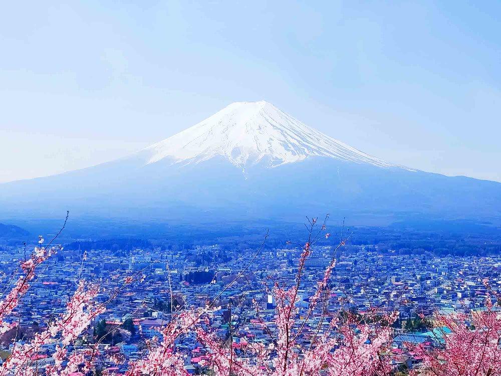 Mount Fuji_cherryblossom.jpg