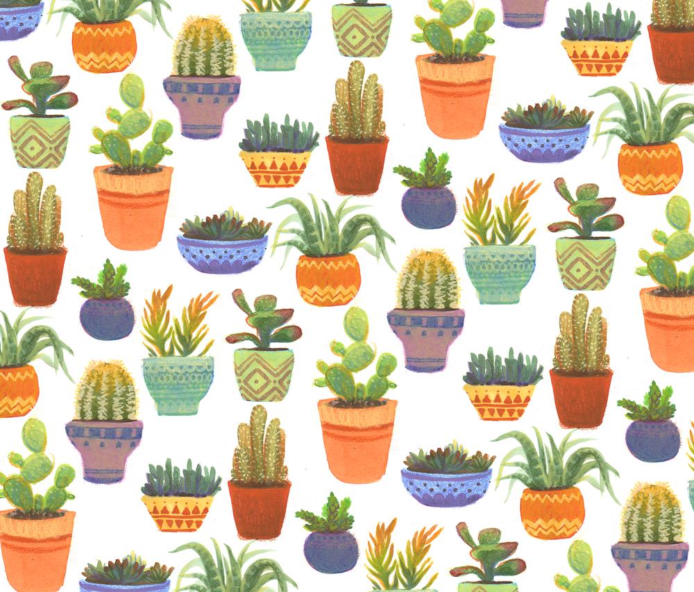 13-succulents.png