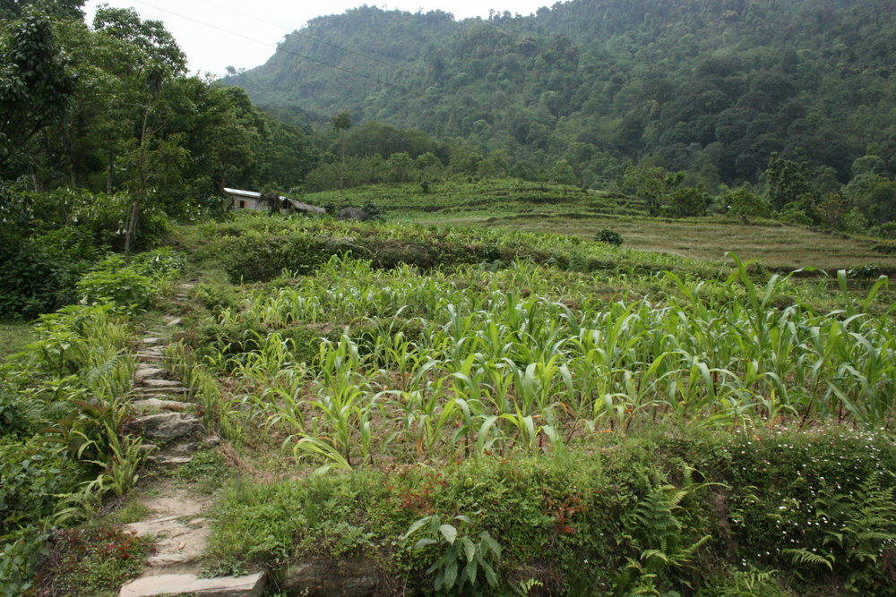 monastic trail, sikkim