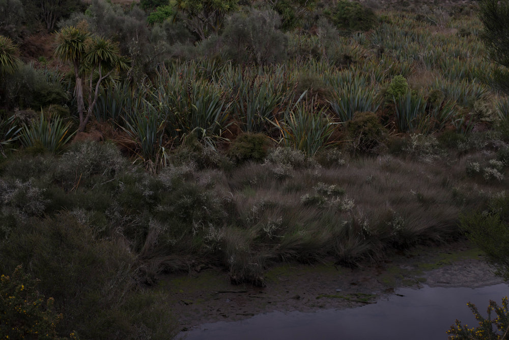 20181117-Akatore Swamp2435Low Res.jpg
