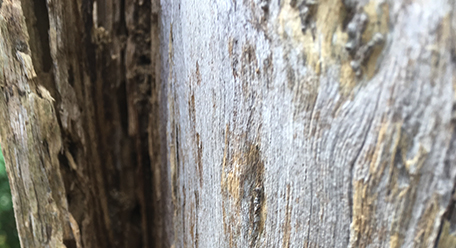 Termites in outside timbers