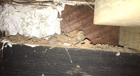 Detached ceailing lining inside roof void