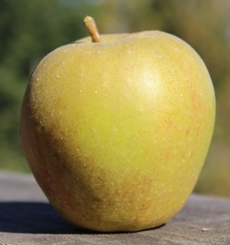 apple_BelledeBoskoop_small.JPG