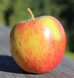 apple_ChiselJersey_small.JPG