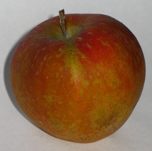 apple_cornishgilliflower_1.JPG