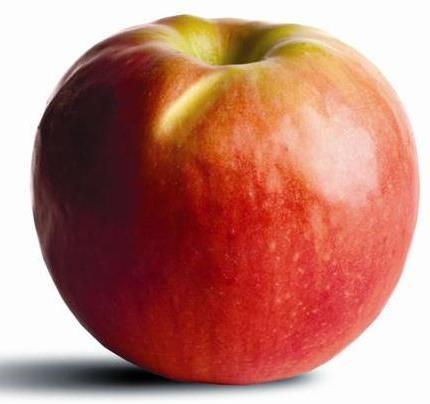 apple_crippspink.jpg