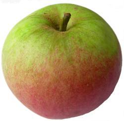 apple_laxtonssuperb.jpg
