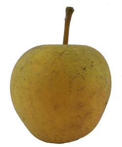 apple_pitmastonpineapple.jpg