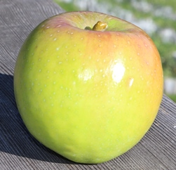 apple_Sandringham_small.JPG