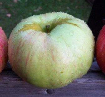 apple_stearns.jpg