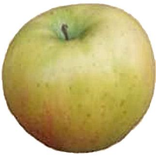 apple_tolmansweet.jpg