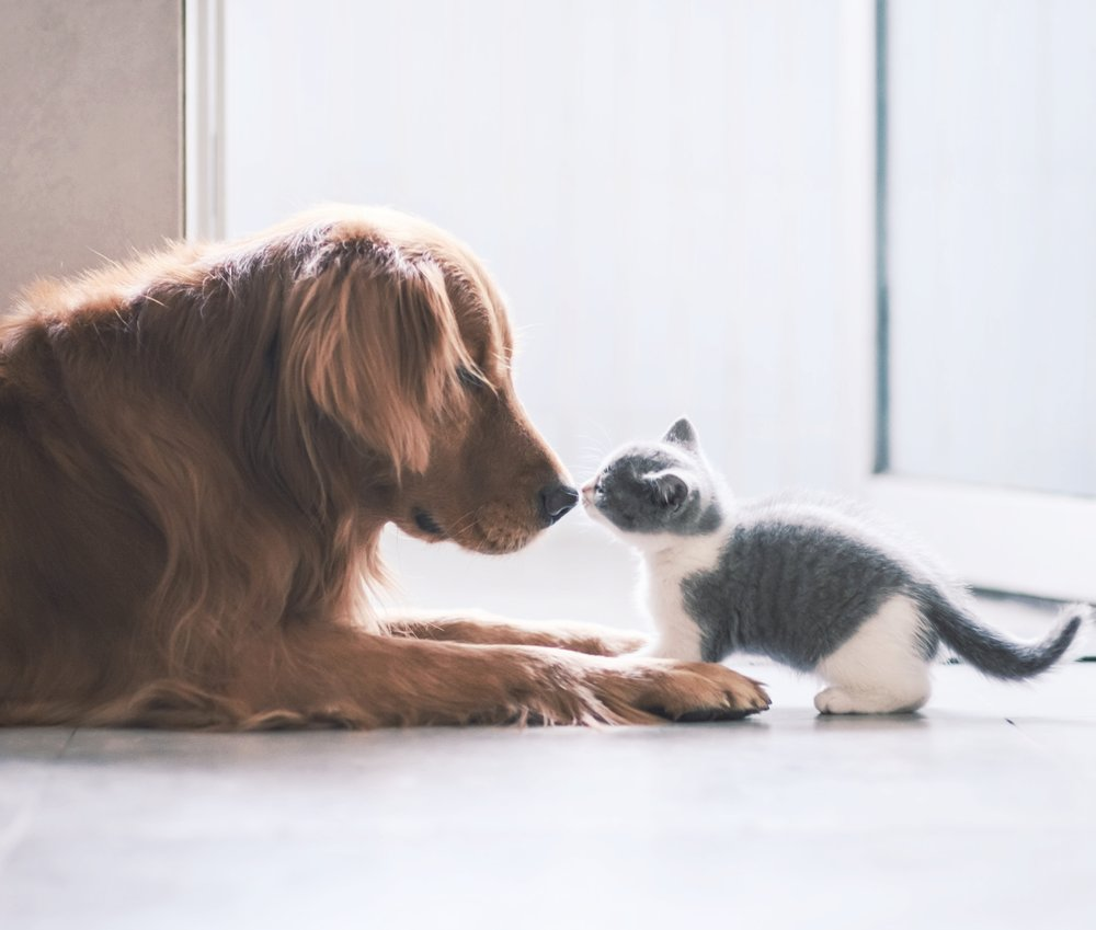 - Pet TreatmentReduced Vet bills, comfort, healing and vitality.Heal at the core of the imbalance rather than medicating the symptom with custom tailored herbal formulas and dietary suggestions. *Massage and energy healing also available.$85  Per SessionServices in Person Skype or Phone