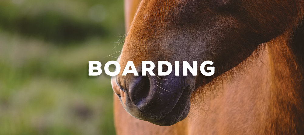 Horse Boarding Anderson SC Riding Lessons Stable