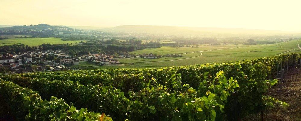 Aÿ vineyard top of the hill.jpg