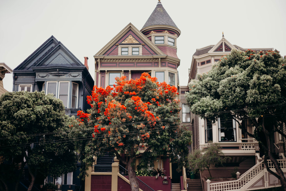 72 Hours in San Francisco | On the Street Where We Live (aretherelilactrees.com)  Painted Ladies, Alamo Square, San Francisco Victorians, Everlane, denim