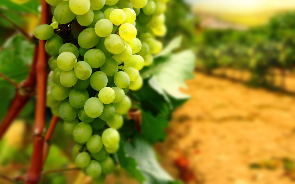 grapes-wallpapers.jpg