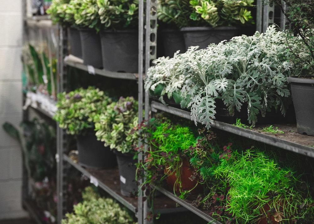 Grønne planter fra Hilverda De Boer
