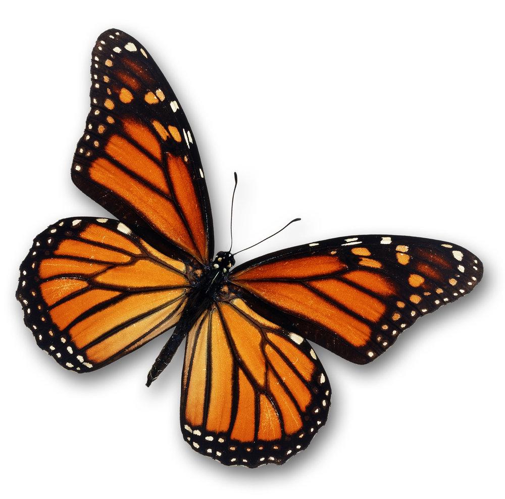 Butterfly_Silo_01.jpg